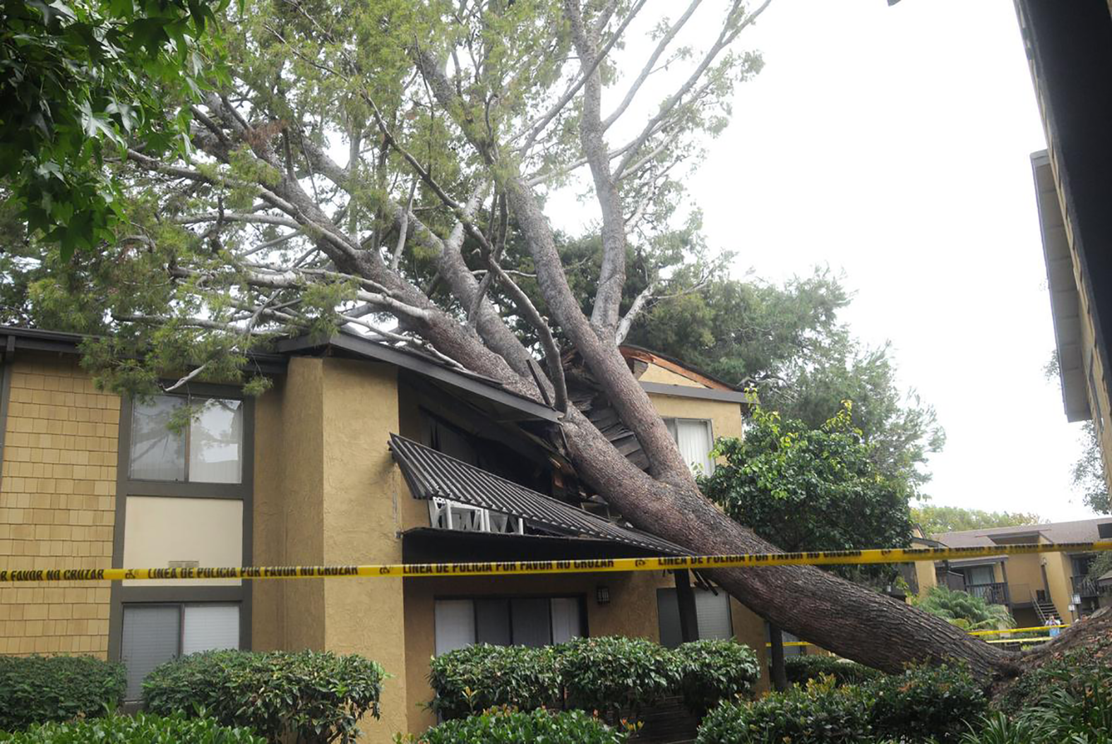 Tree Fallen on Apartments
