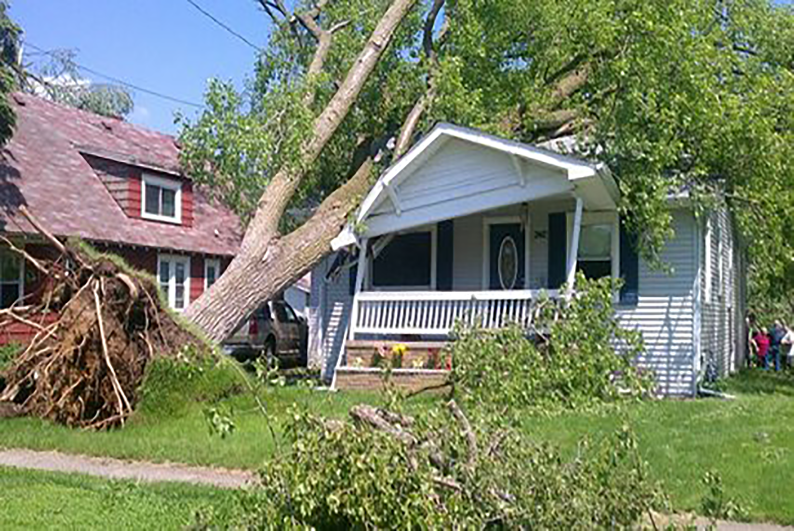 tree-on-house.png